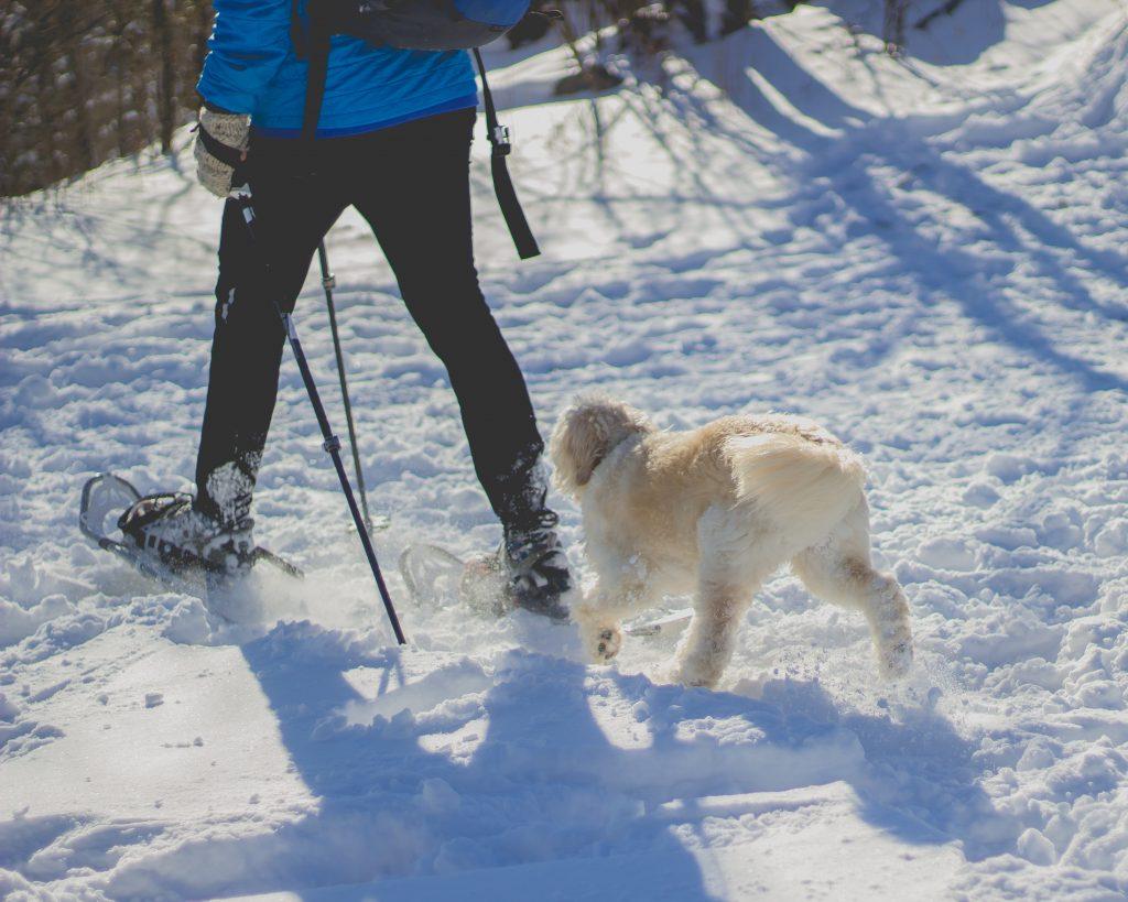 Personne chaussée de raquettes en train de marcher dans la neige avec son chien