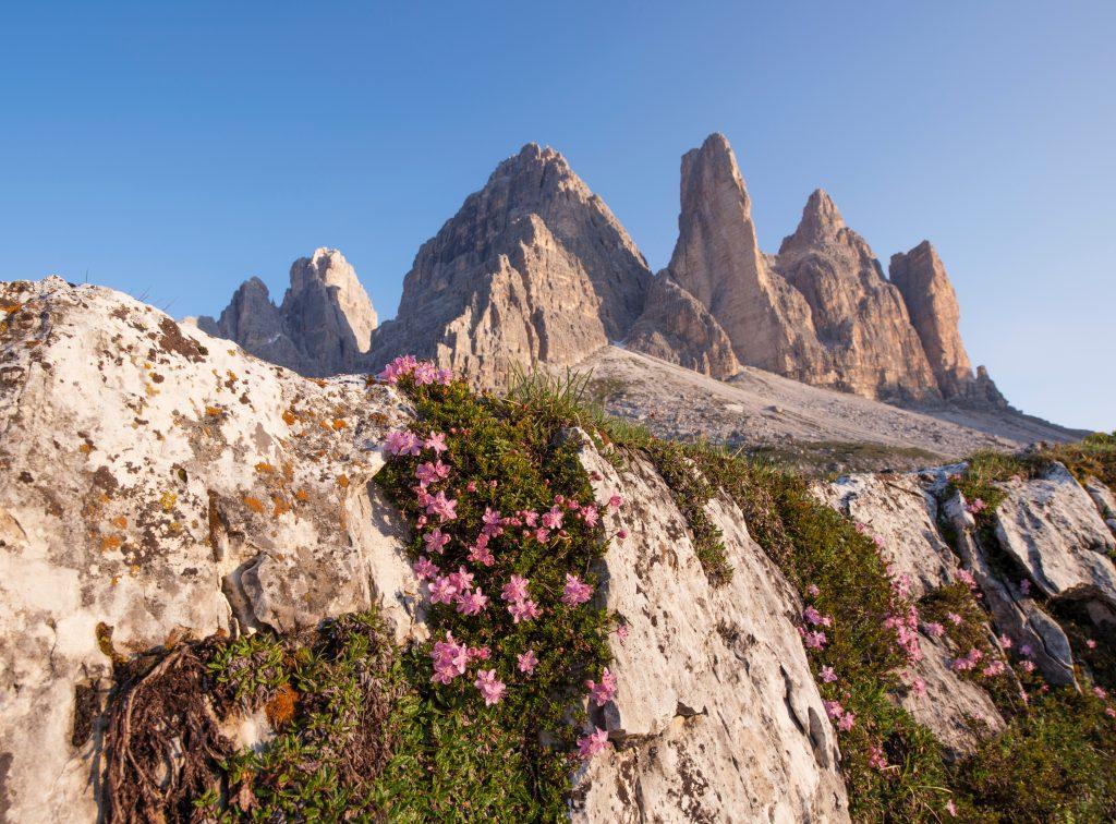 Sommets de montagne fleuris en été