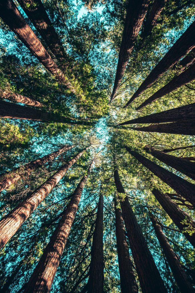 Arbres forêt montagne